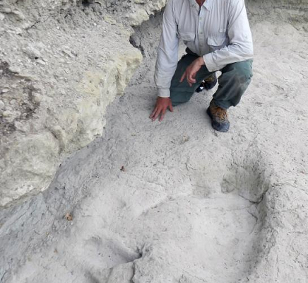 Steps in Stone: Dinosaurs Without Bones; Dinosaur Lives Revealed by Their Trace Fossils - April 30