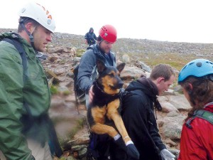 Animal Help Now's free app helps users in emergencies like this one where an injured dog was rescued on Mount Bierstadt.
